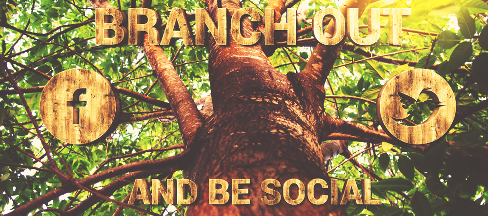 branch-out4